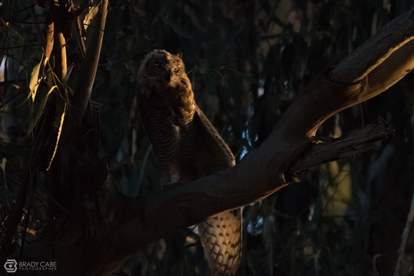 Last Light on Owl